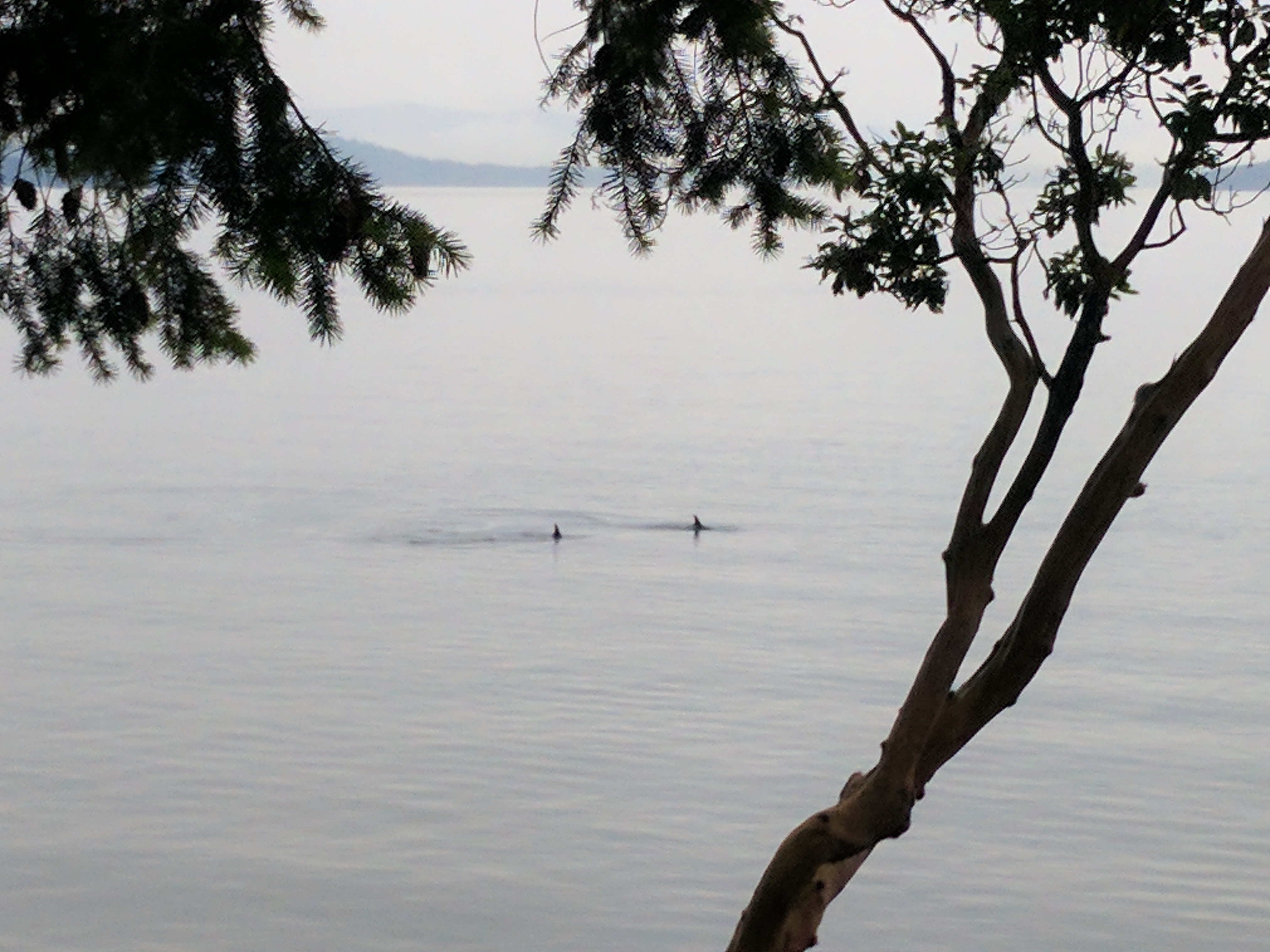 Whale Watching Pender Island